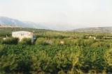 Greek Countryside