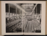 Photograph, Horicultural Hall,...