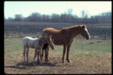 Image for Mare and foal