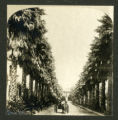 Image for Avenue of Palms