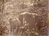 Image for Elephant Kraal (?)