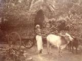 Image for A Bullock Bandy, Ceylon.